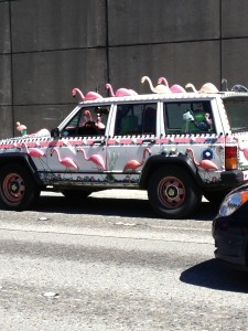 flamingo car