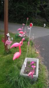 pink flamingos lawn